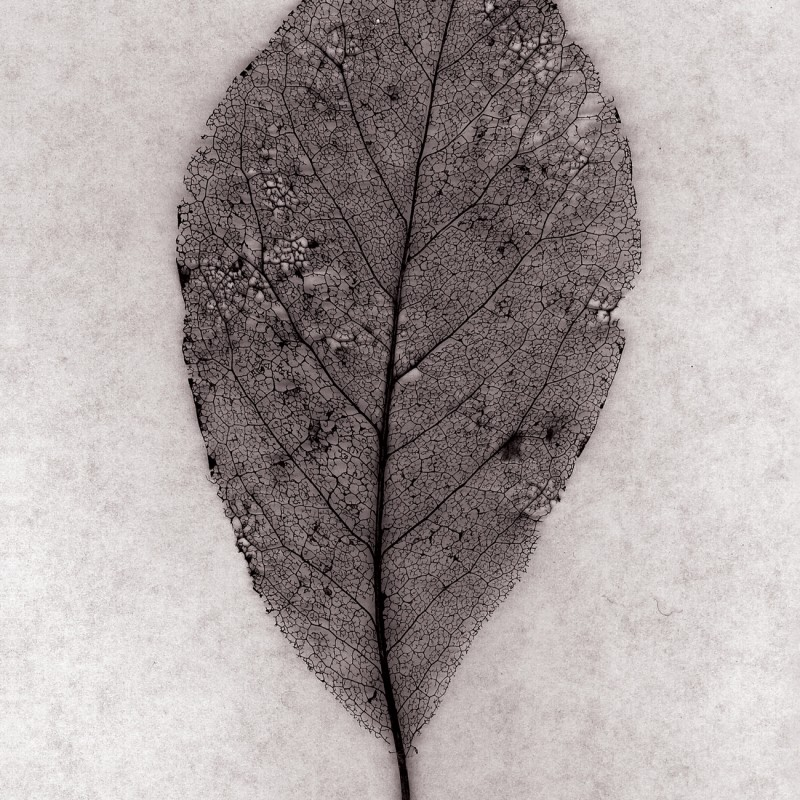 Artwork Leaf Lace from Souls Series